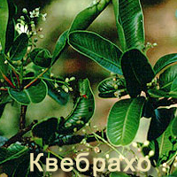 Квебрахо