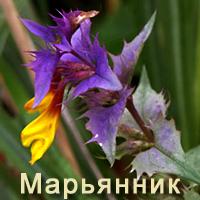 Марьянник